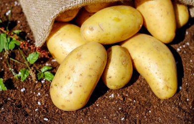 Is Potato Good for Health?